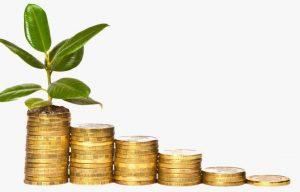 суеверия денежное дерево